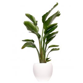 Groen decoratie (Plant in Pot)